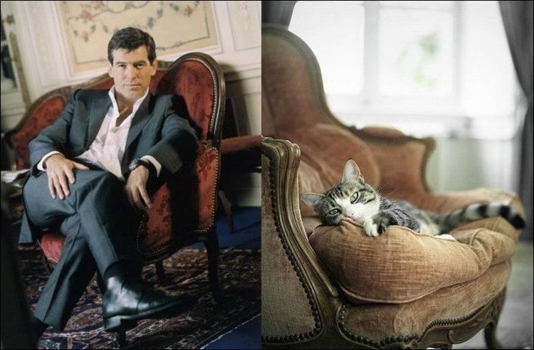 Котки като хора